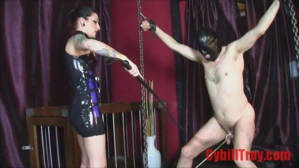 Cock whipping by femdom videos
